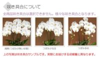 咲き具合について